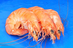 Three shrimps over blue Stock Photo