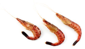 Three shrimps on a white background Royalty Free Stock Images