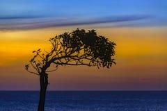 Free Three Silhouette Sunset Scene, Montevideo, Uruguay Stock Image - 180950051