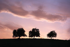 Three Silhouette Trees At The Twilight Stock Photos
