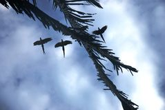 Three silhouetted parrots flying overhead. Three parrots are silhouetted against a blue and white sky as they fly overhead and over palm tree fronds Royalty Free Stock Images