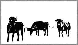 Three silhouettes of the cows. Silhouettes of the black cow on a white background Royalty Free Stock Photos
