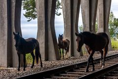 Three silhouettes of a horse walking on rails in the countryside stock image