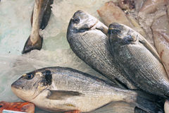 Three silver breams. Three silver fish, on the ice, at the local market Royalty Free Stock Photo