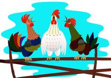 Three singing rooster Royalty Free Stock Image