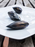 Three single sea mussels. On a white ceramic plate Royalty Free Stock Photos