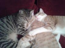 Lucky cat family. Three Sister cats royalty free stock photo