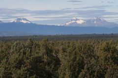 The Three Sisters and a Juniper Forest Royalty Free Stock Photography