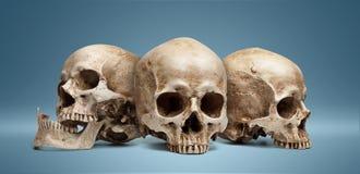 Three skull Royalty Free Stock Image