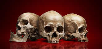 Three skull Stock Photography