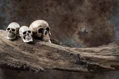 Three skull on old wood Royalty Free Stock Images