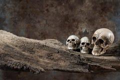 Three skull on old wood Stock Images