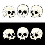 Three skulls Royalty Free Stock Image
