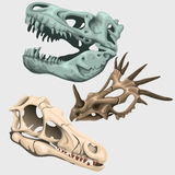 Three skulls of ancient large animals Stock Images