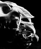 Three Skulls on Black Background Stock Image