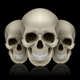 Three skulls. Illustration of three skulls with reflection on black background Stock Images