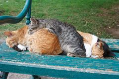 Three sleeping cat on the bench. Outdoors Stock Photos