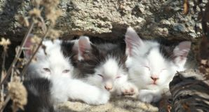 Three Sleepy Kittens in the sun (color) Royalty Free Stock Photos