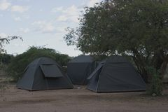 Three tents erected in rest camp. Three small blue tents erected in camping ground inside rest camp under a tree royalty free stock image