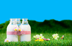 Three small bottles of milk in a meadow Royalty Free Stock Photos