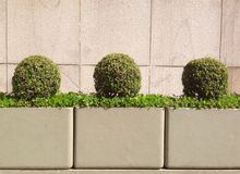 Three small bushes Royalty Free Stock Images