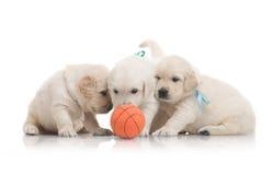 Three small cute dog puppy Stock Photos