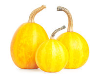 Three small decorative pumpkin Royalty Free Stock Photography