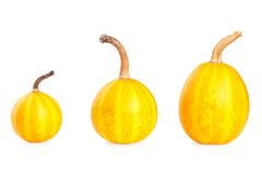 Three small decorative pumpkins Royalty Free Stock Photography