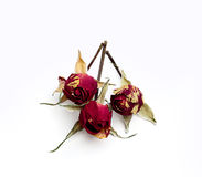 Three small dried roses Royalty Free Stock Image