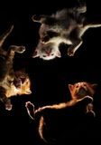 Three small kittens. Play with each other on black. The bottom view Stock Image