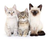 Three small kittens Stock Photos