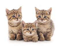 Three kittens. Three small kittens on a white background Royalty Free Stock Photos