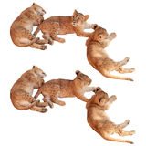 Three small lion cubs sleeping and resting laying down. Isolated on white background Stock Photography