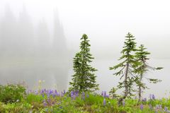 Three small pine trees near lake with flowers and fir trees. Royalty Free Stock Photos