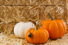 Three small pumpkins against straw w/ shallow DOF Stock Photos