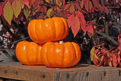 Three Small Pumpkins Stacked. This still life is three small pumpkins stacked on a wooden crates against bright red fall leaves Royalty Free Stock Image