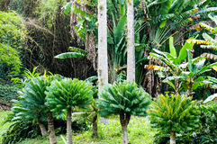 Three small royal palms Royalty Free Stock Image