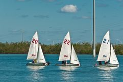 Three, small sailboats in back bay of Gulf of Mexico. Three, small sailboats, being sailed by a group of teenage, students from a sailing club on the back bay of royalty free stock image