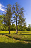 Three small trees. In the park on the beautiful summer morning royalty free stock images