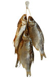 Three smoked sea roach fishes. Isolated on white stock images