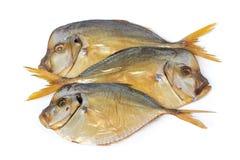 Three smoked Vomers fish Stock Image