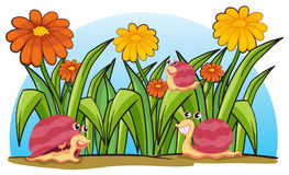 Three snails in the garden Royalty Free Stock Images