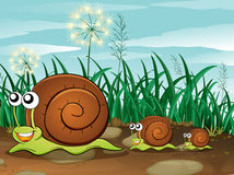 Three snails Stock Photos