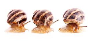 Three snails isolated Stock Photos
