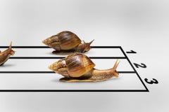 Three snails racing Royalty Free Stock Image