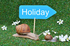 Three snails Royalty Free Stock Photography