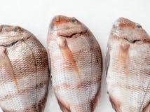 Three snapper sea fish close up royalty free stock photos