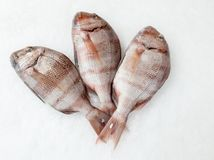 Three snapper sea fish view from top royalty free stock photography