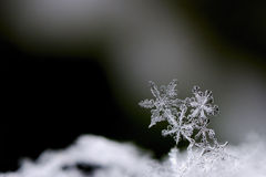 Three snow crystals large view Royalty Free Stock Photography