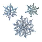 Three snowflakes isolated on white background. Macro photo of real snow crystals: large stellar dendrites with complex, elegant shapes, fine hexagonal symmetry Royalty Free Stock Image
